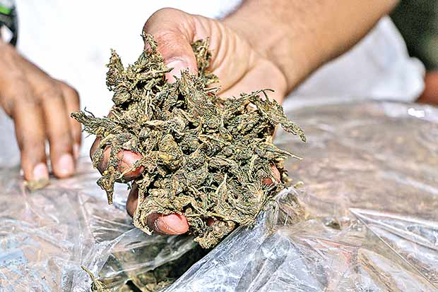 3000 Kg 'Ganja' seized in Odisha