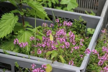 Princezzinnen Garten pinks