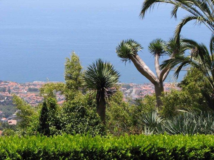 291117_Funchal_cote_jardin_15