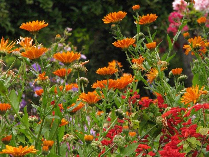 291117_Funchal_cote_jardin_45