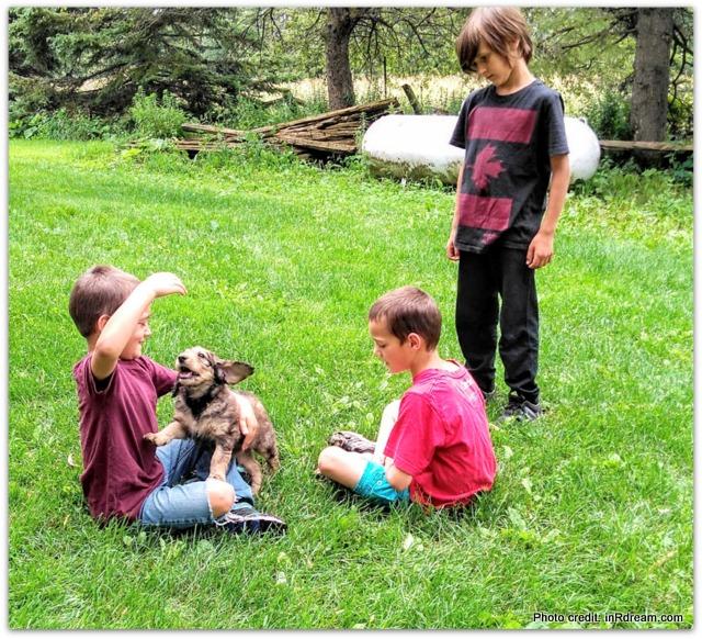 Goldendoodle, Unique Goldendoodle colours, Unique Goldendoodle, Red sable Goldendoodle, Red Sable Goldendoodle, f1b red sable Goldendoodle, Why Goldendoodle, Goldendoodle family, Goldendoodle puppy, f1b Goldendoodle puppy, unique color Goldendoodle puppy, happy Goldendoodle, new Goldendoodle puppy, 2017 Goldendoodle puppy, sable Goldendoodle puppy,