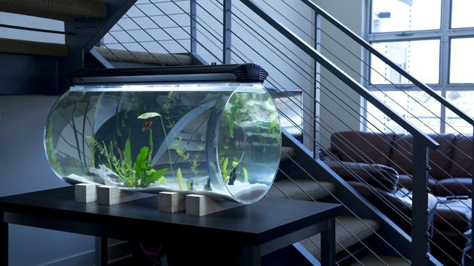 14 Desain Aquarium Unik Dan Cara Membuatnya Inreview Id