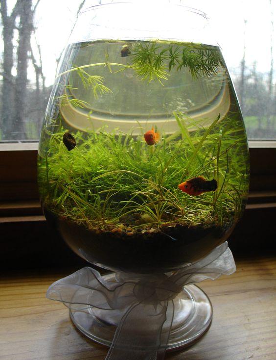 aquarium kecil gelas wine