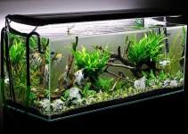 aquarium bersih