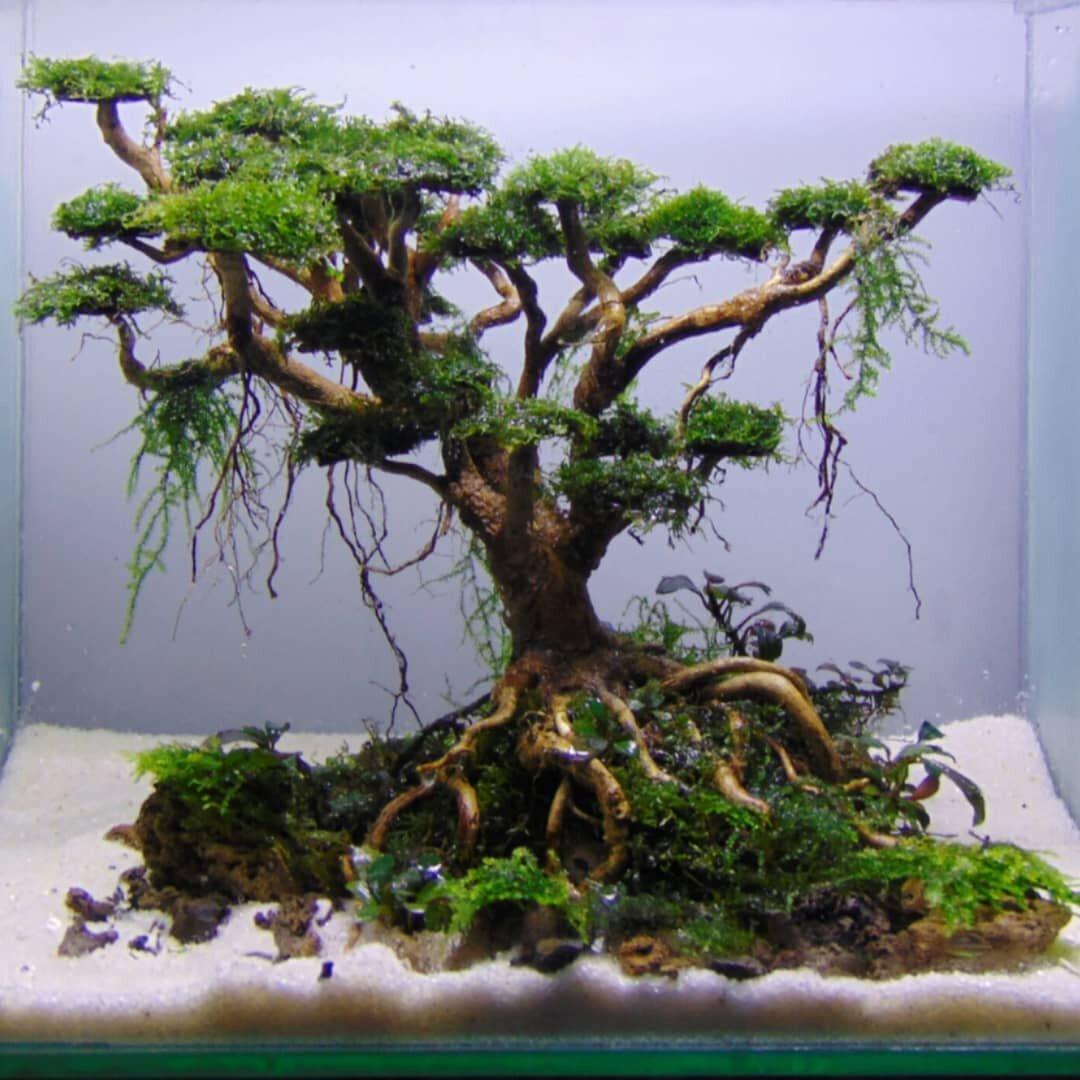Ragam Hiasan Aquarium dan Tips Dekorasi 2