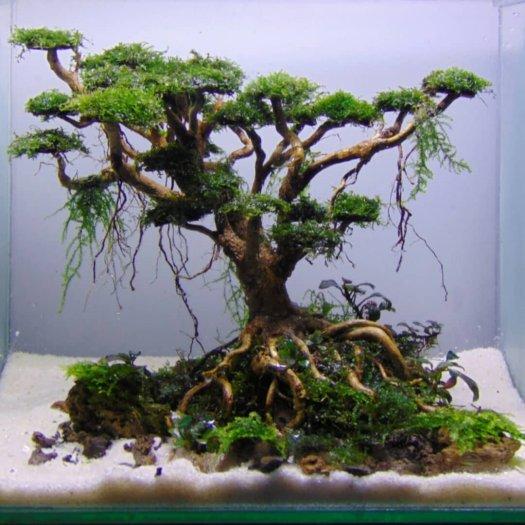Hiasan Aquarium Akar Bonsai