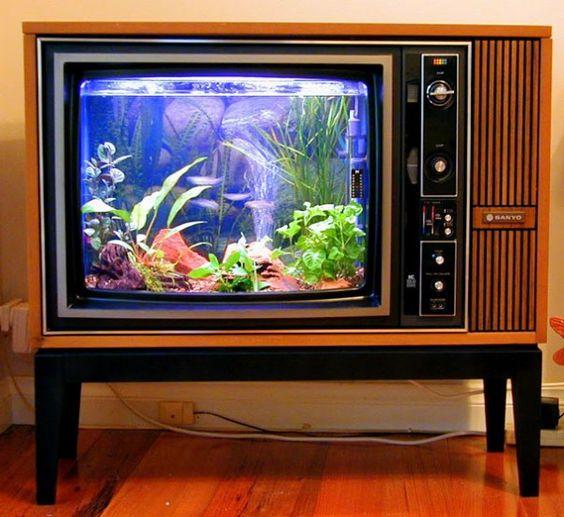 aquarium kecil tv
