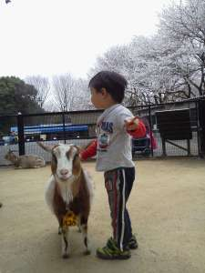 Cherry Blossoms at Chikozan Park Children's Zoo | SAYAMA