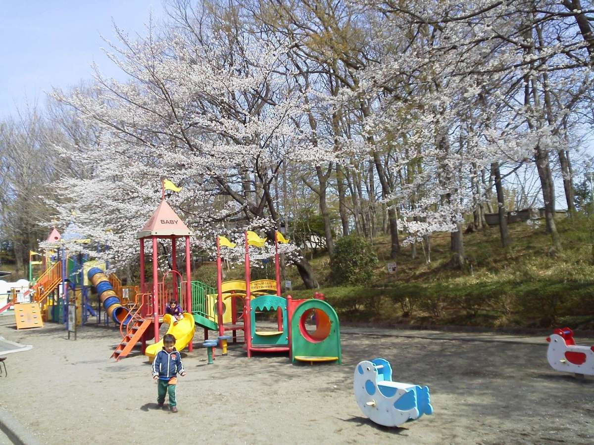 Cherry Blossoms at Kitamoto Children's Park | KITAMOTO