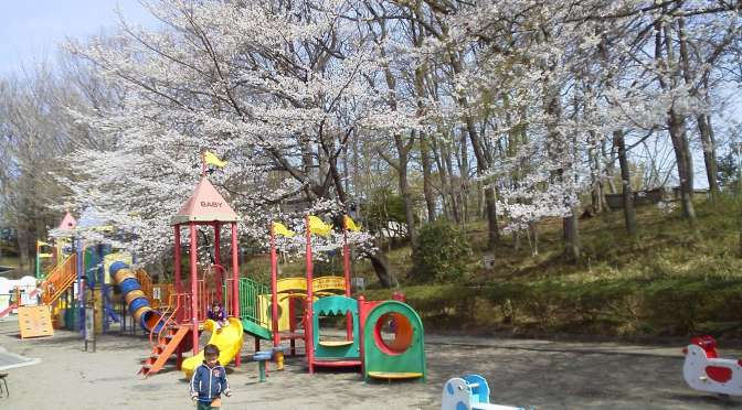 Cherry Blossoms at Kitamoto Children's Park