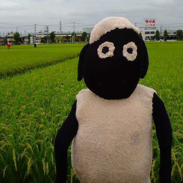 Shaun the Sheep in Saitama