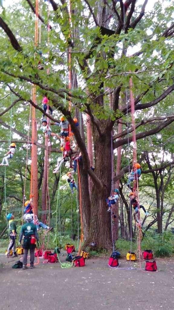 Tree climbing in Saitama