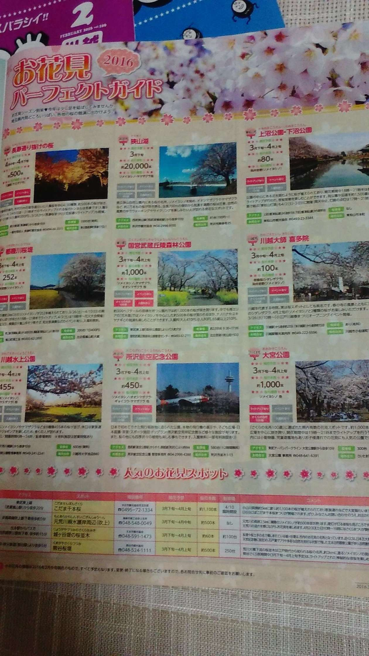 Feature on Cherry Blossoms in Moteco Free Magazine