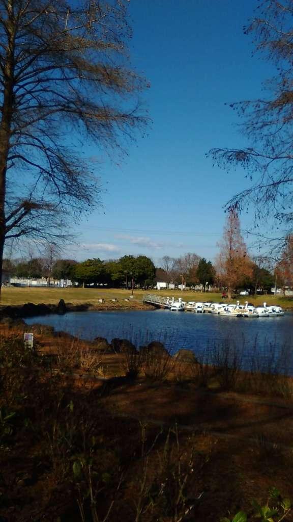 Lake with swan boats Kazo Hanasaki Park