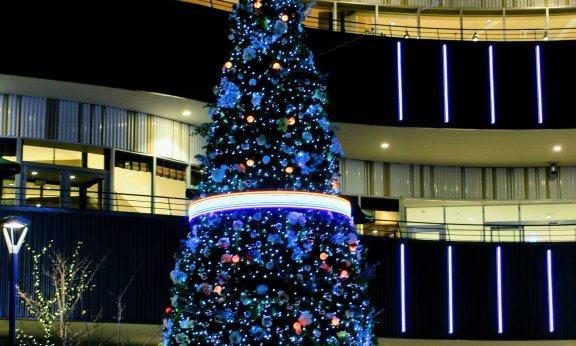 Cocoon City Night Illumination Christmas Tree Cocoon City Christmas