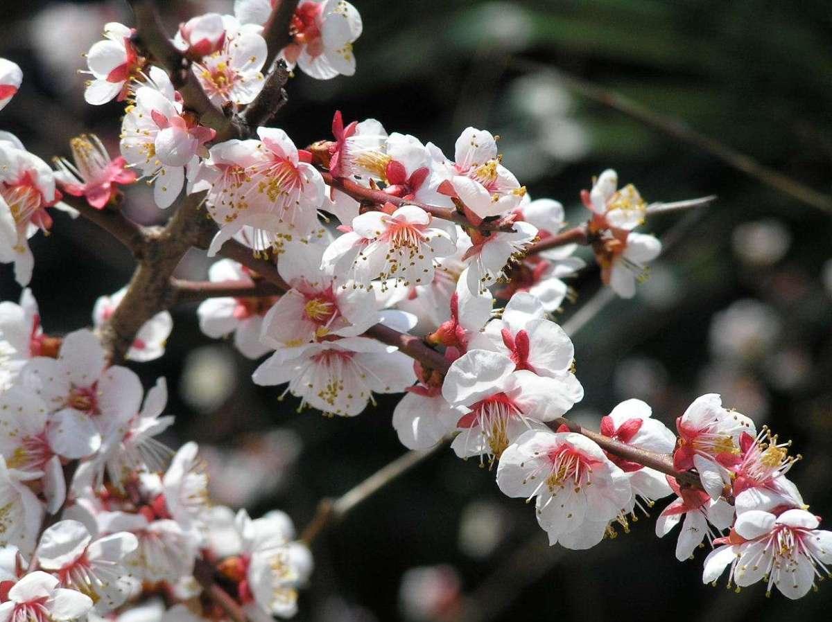Cherry Blossom Festival, Horseback Archery and Fireworks | RANZAN