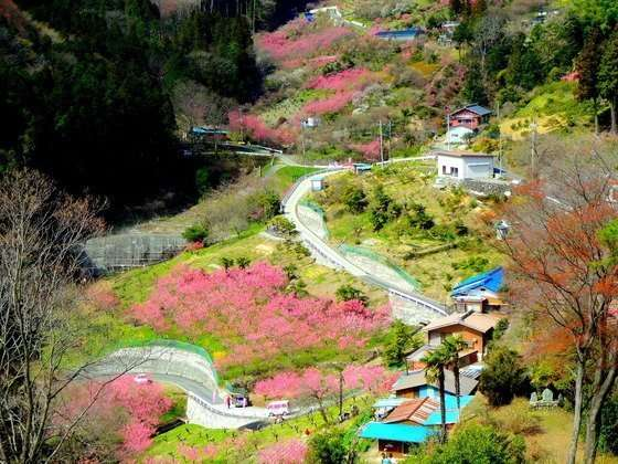 "Saitama Snaps Showcase: ""An Earthly Paradise""  