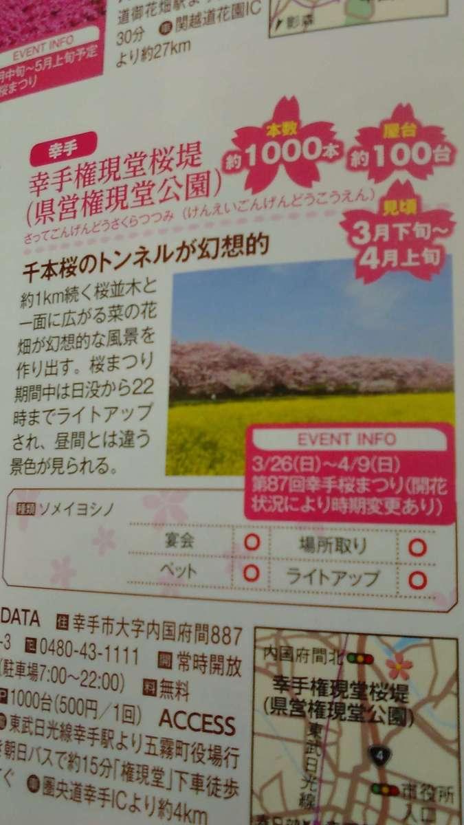 Cherry Blossom Festival at Gongendo Park | SATTE