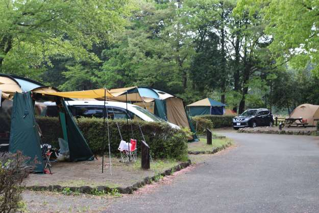 cherry blossom camp site