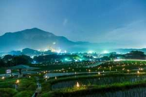 Candle night at terasaka terraced rice field where there is also a cluster amaryllis or red spider lily, festival