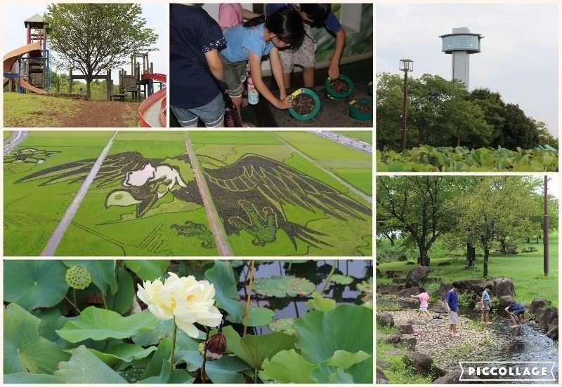 Rice Field Art and Ancient Lotus: Kodai Hasu No Sato   GYODA