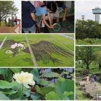Rice Field Art and Ancient Lotus: Kodai Hasu No Sato | GYODA