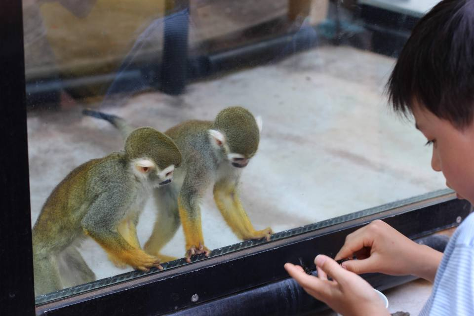 Monkeys at Omiya Park Zoo