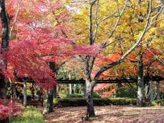Stunning leaves at Monomiyama Park