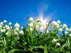 happy spring festival shinrin park
