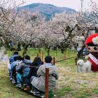 Visiting Ogose Bairin Plum Blossoms