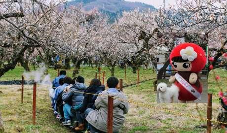 Umerin and Mini SL at Ogose Bairin best flowers 2019 plum blossoms ume