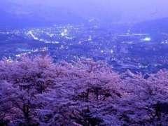 Minoyama CHerry blossoms