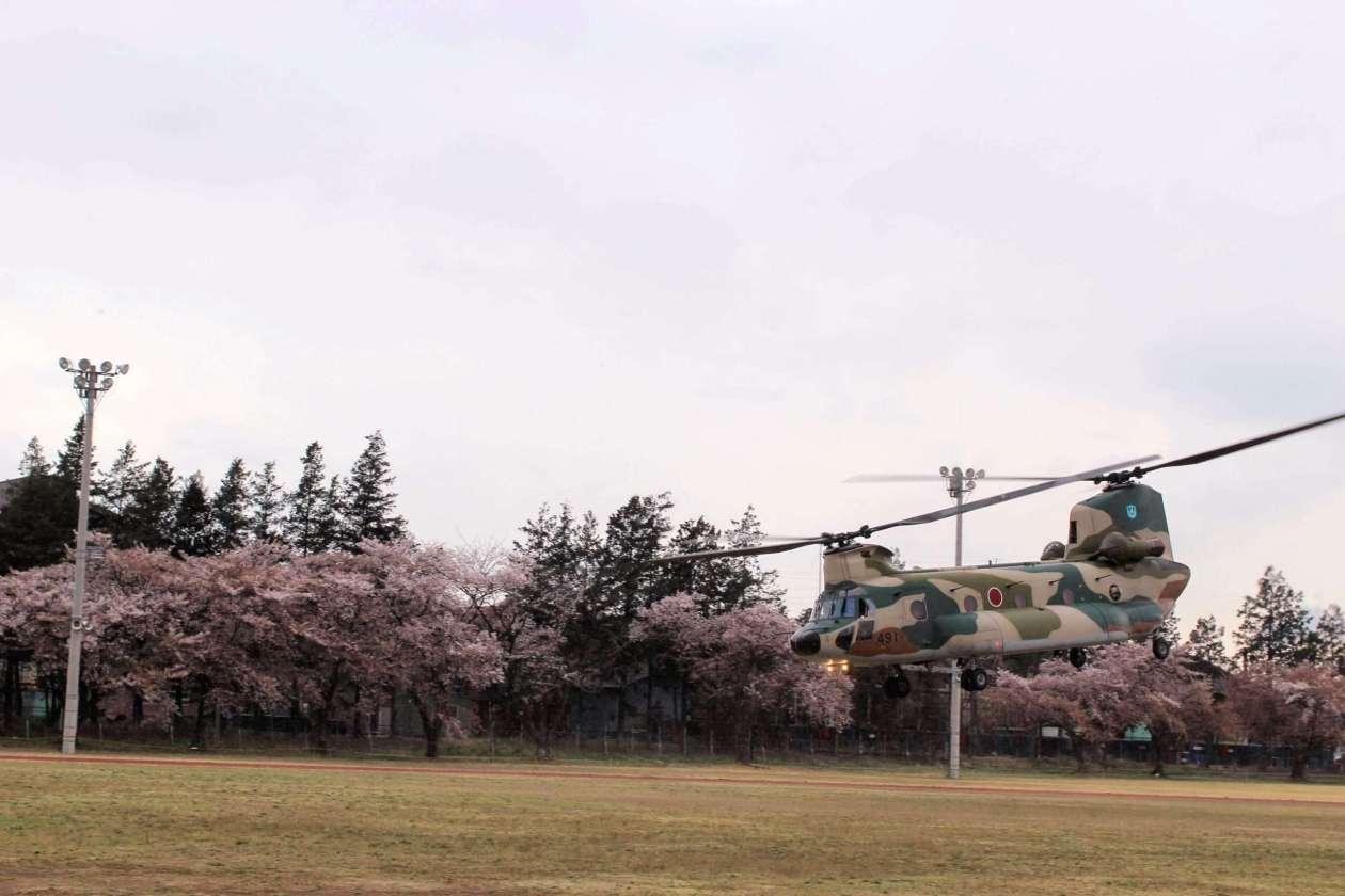 A chinook taking off at the 2019 JASDF Kumagaya Air Base Cherry blossom festival