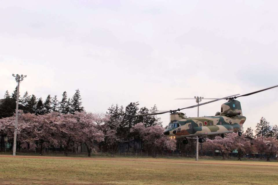 A chinook taking off at the 2019 JASDF Kumagaya Air Base Cherry blossom festival