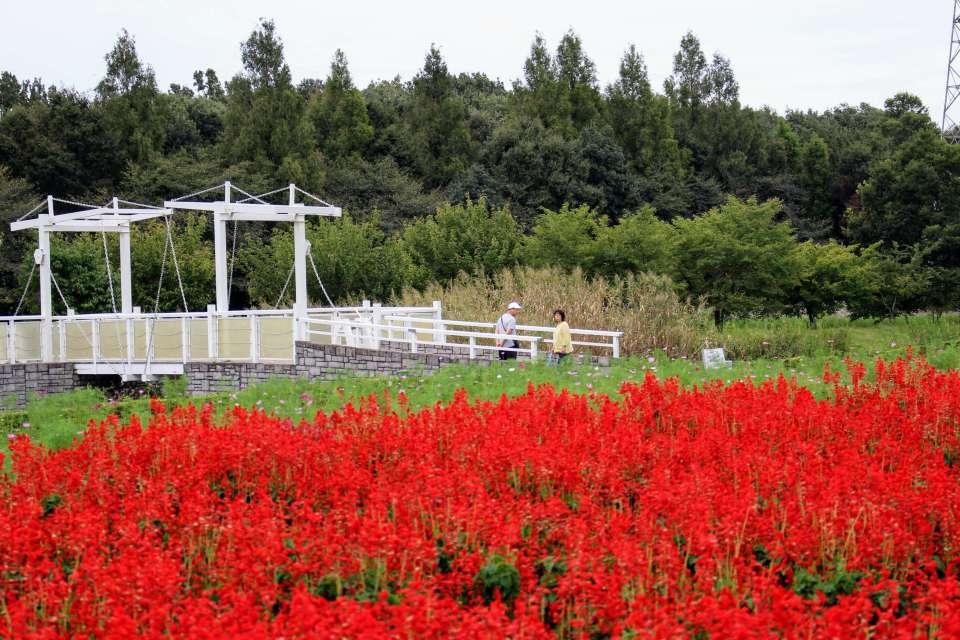 Salvia Omiya Hana no Oka Park