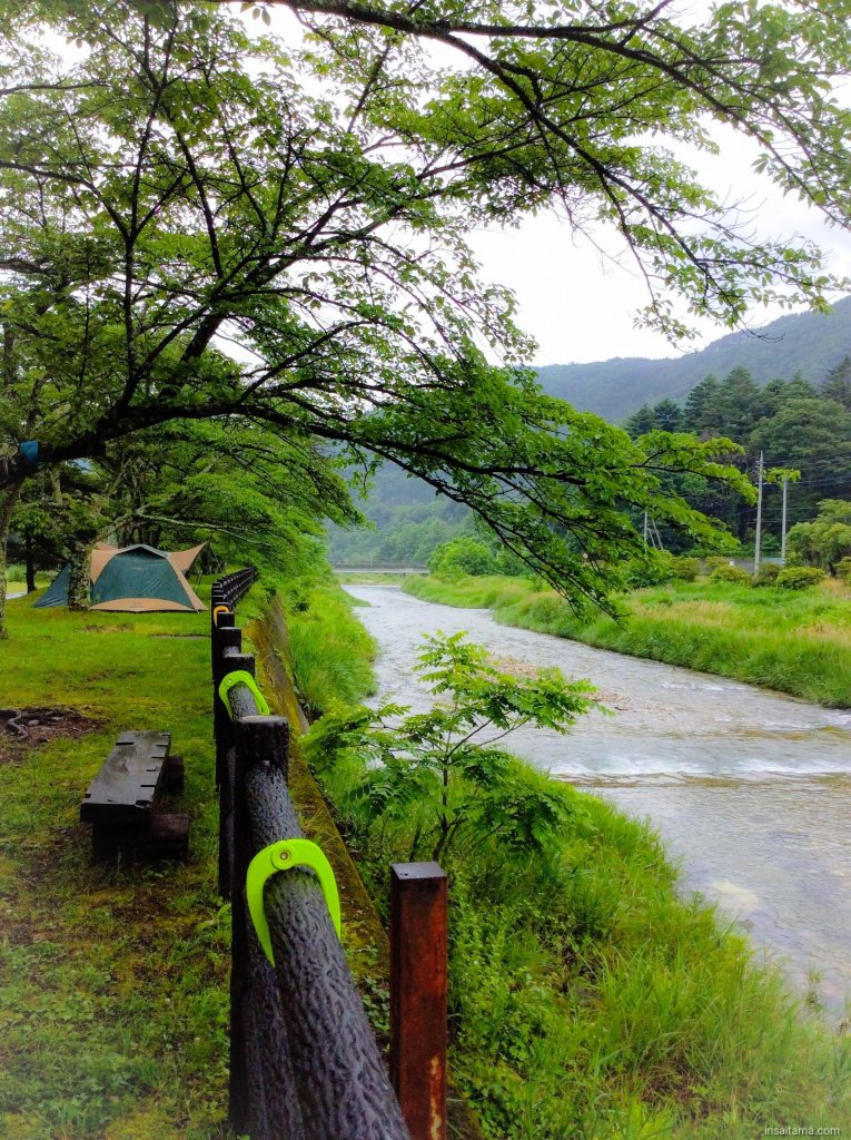 Riverside campsites under cherry blossoms. tents for rent