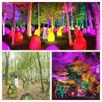 TeamLab Acorn Forest