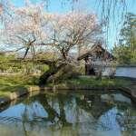 CHerry blossoms at temple gate Kotokuji Kawajima