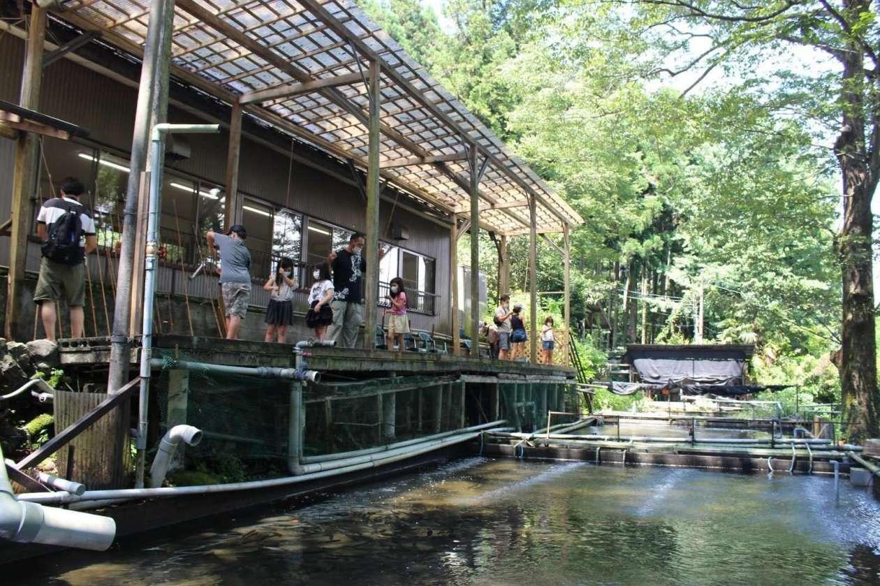 Fuppu Nijimasu Fishing ponds yorii saitama Rainbow trout fishing restaurant