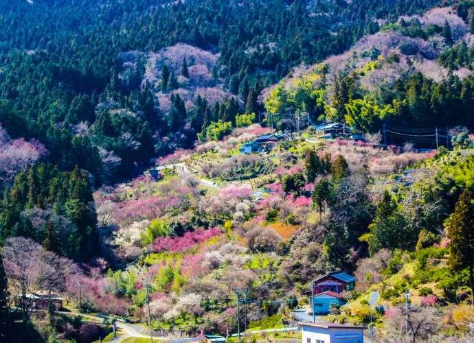 hanamomo no sato ouchizawa higashichichibu earthly paradise