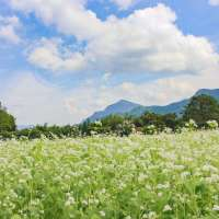 Buckwheat galore and the Arakawa Roadside Station