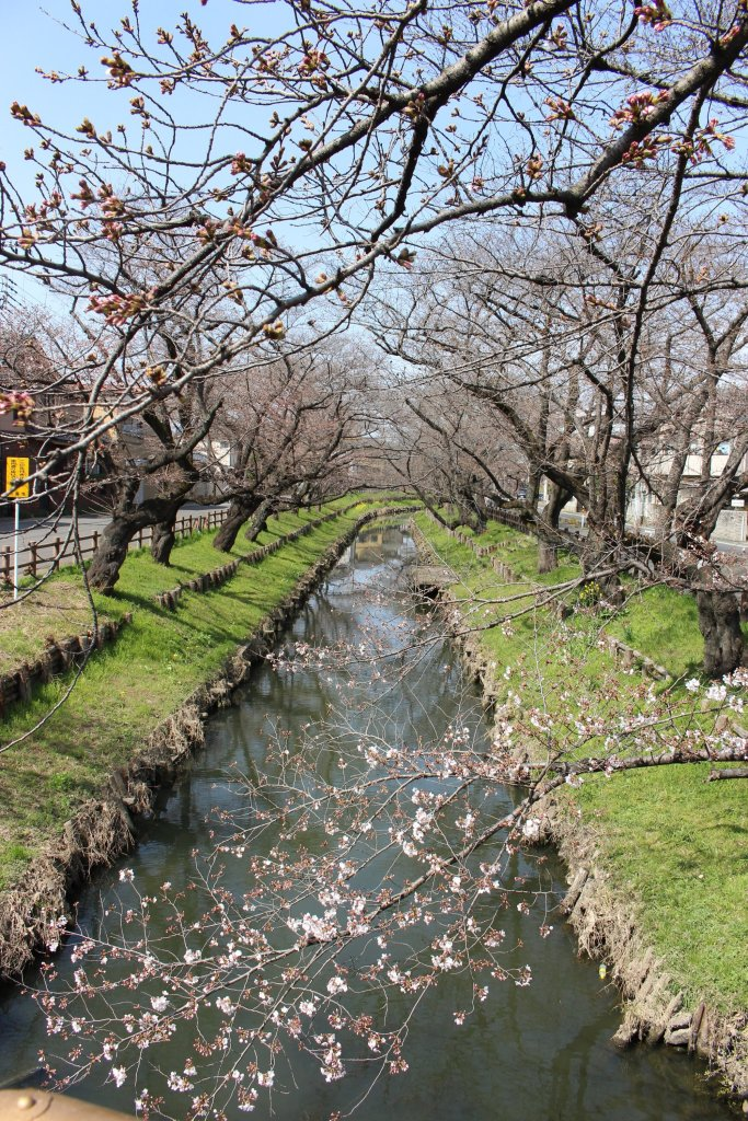 Shingashi River March 19th 2021