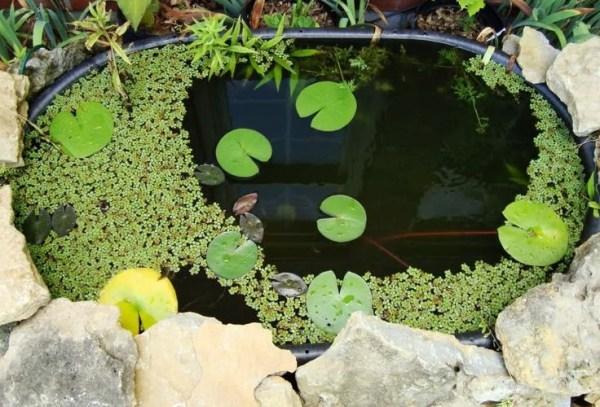 outdoor fish tank garden