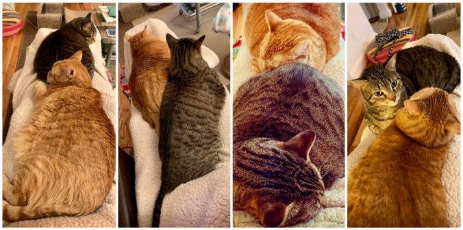 Our Cat-babies on my leg hammock
