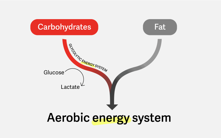 How the aerobic energy system burns fat and carbohydrates via the glycolytic energy system that uses glucose and produces lactate