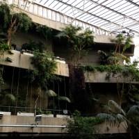 London Ramblings #4: The surprising Barbican Conservatory