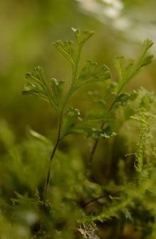 Filmy fern
