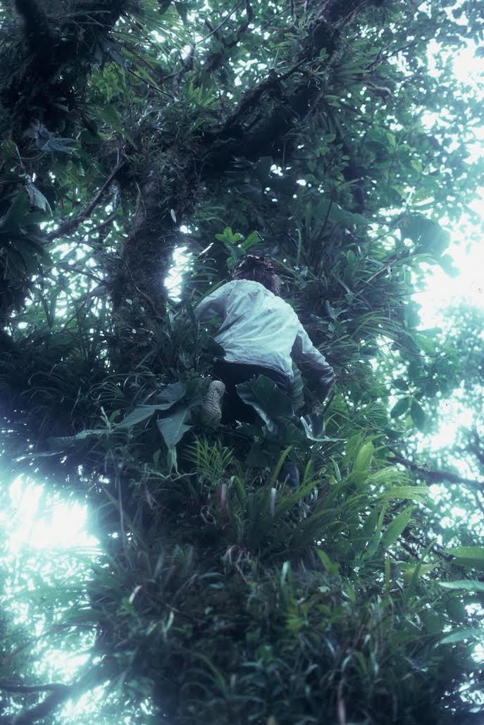 Ian climbing a tree with O. arborea calling above
