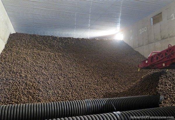 downey potato farms