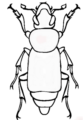 blank beetle.png — Insect Adventure